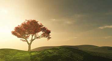Arbre au soleil couchant